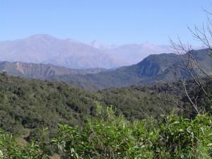 Yunga Forest - Jujuy Argentina